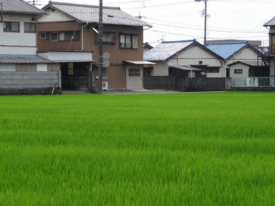 080813_green_rice_house_1_400