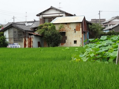 080813_green_rice_house_2_400