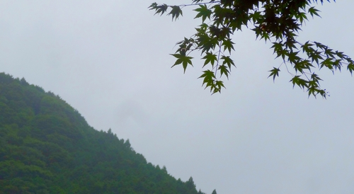 140813_mountain_and_maple3_500