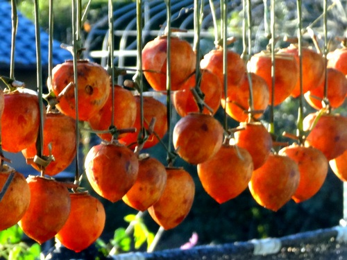 141114_drying_persimmons_500