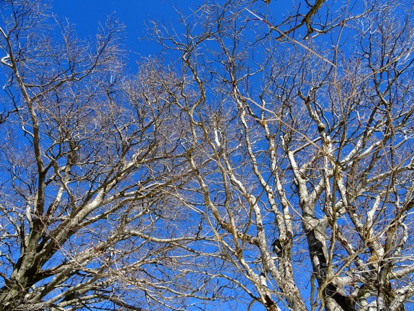 150201_blue_sky_branches_600