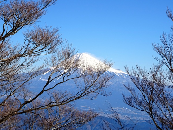 150201_fuji_and_branches_600