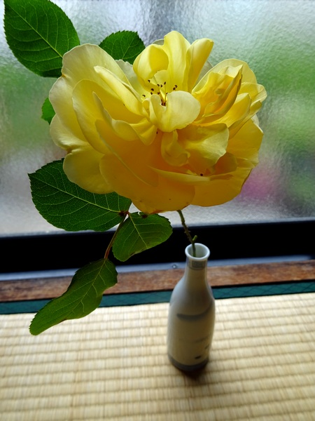 150509_rose_and_vase_450