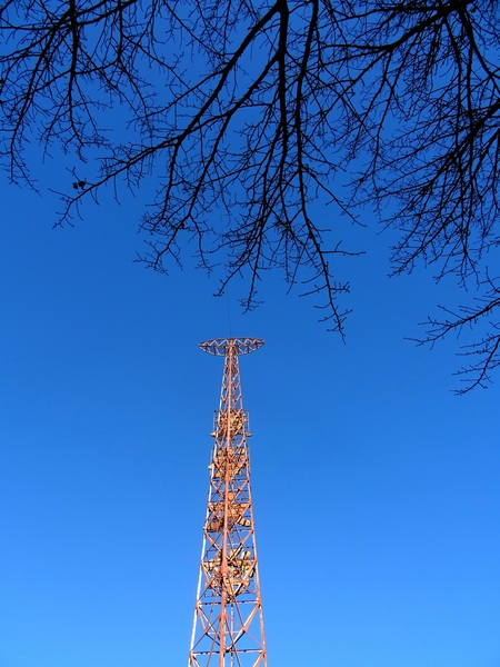 151224_Christmas_Eve_tower_branches_450