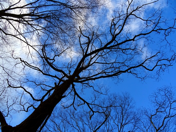 160118_blue_sky_branches_600