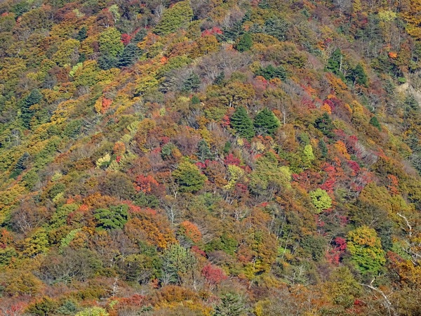 161103_fall_colors_mountainside_600