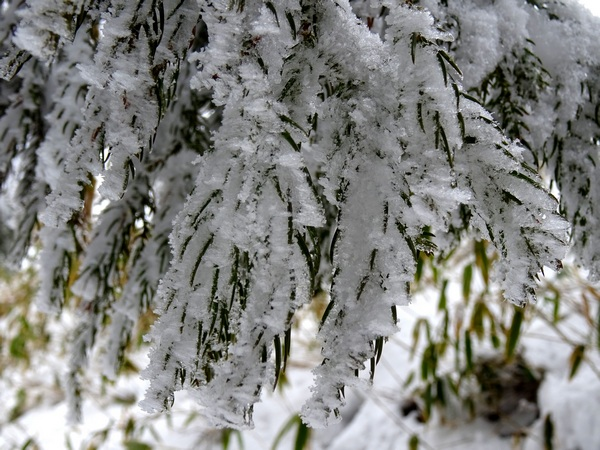 170402_snow_needles_600