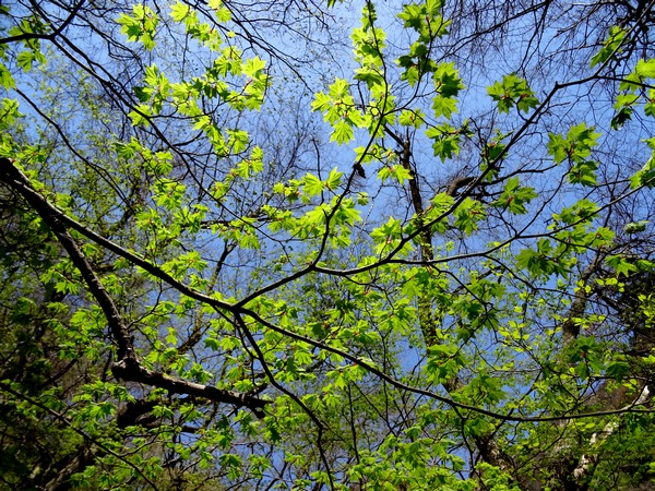 170430_fresh_green_leaves_600